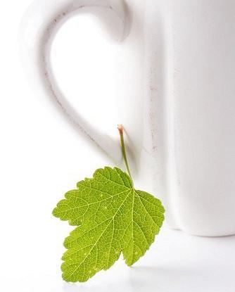 Летний черный чай со смородиновым листом