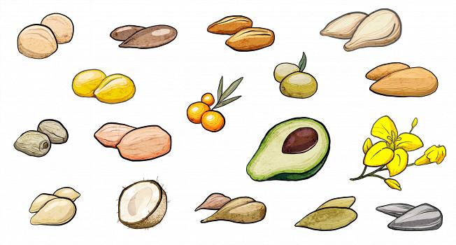 16 растительных масел — что с ними можно сделать