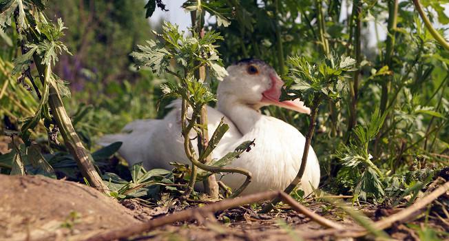 На птичьих травах