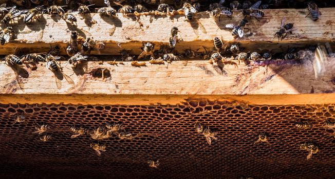 Что такое мед?