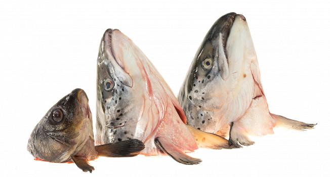 Рыбные головы